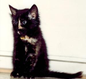 Morticha Kitten