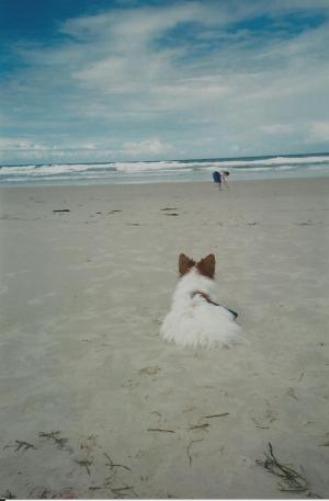 Corey The Beach Bunny!