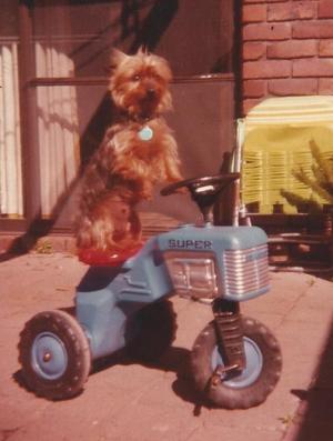 Penny On A Trike!