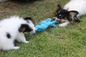 Tug-Of-War!