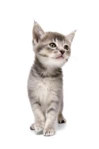 Kids Page - Kitten