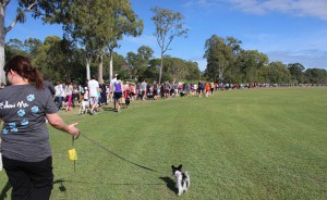 A Million Paws Walk Together For A Cause!