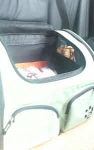 Amber Asleep In Her Car Seat