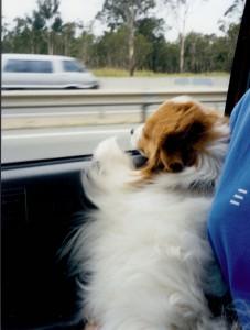 Corey Loved Car Rides!