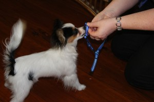 Treats In The Harness Worked A Treat!