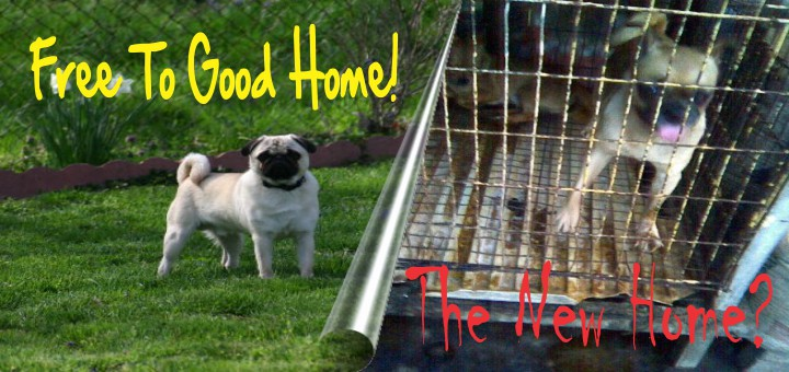The Real Dangers Of Re Homing Your Pet For Free Pressplay Pets