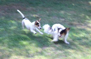 Indy and Jack Playing