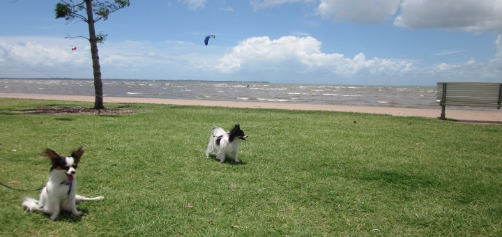 Indy's 1st Birthday Enjoying Sandgate