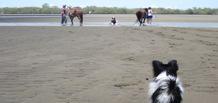 Nudgee Beach Horse 3