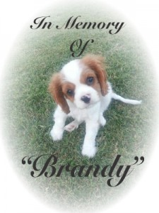 In Memory of Brandy