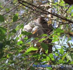 Look...A Koala!
