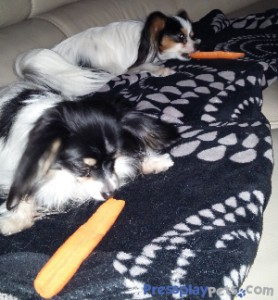 Yum Carrots!