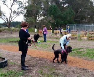 Complete Canine Communication Workshop
