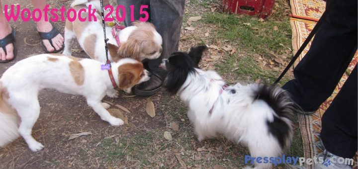 Woofstock 2015 (5)