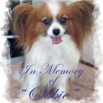 In Memory of Obbie