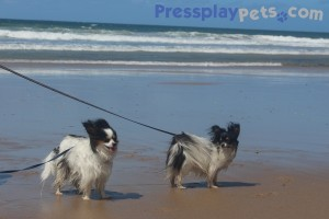 The On Leash Only Dog Beach Is PAWsome For Us Little Pooches!