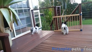 Amber and Indy Have A Birds Eye View From The Deck!