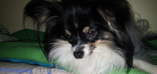 I Found A Paralysis Tick On My Dog