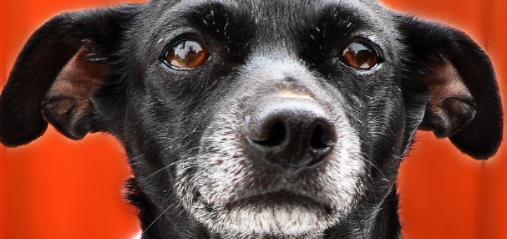 sudden blindness in dog