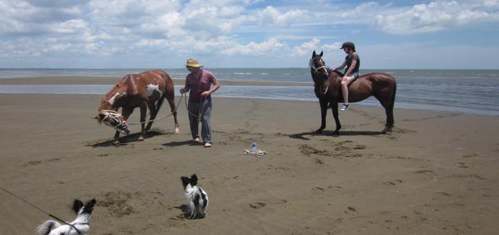 Nudgee Beach Horse 2