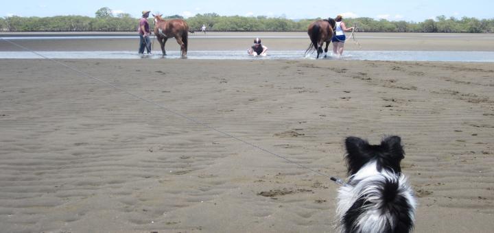 Nudgee Beach Horse 3