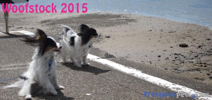 Woofstock 2015 (6)